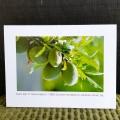 Olives!